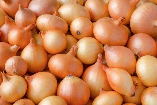 Лук Стурон — характеристики, особенности посадки, ухода, сбора урожая и хранения